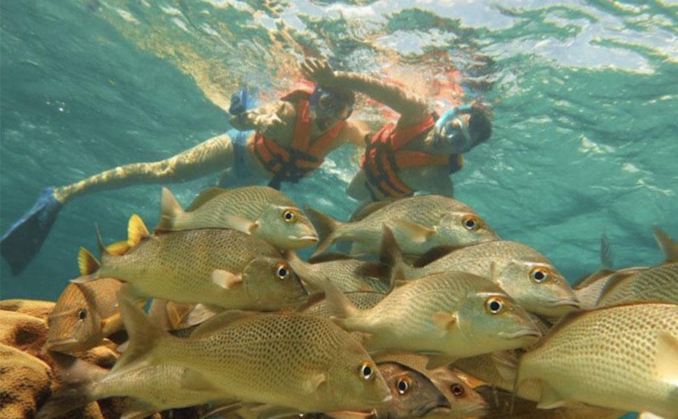 Scuba Diving and Snorkel: Scuba Diving 2 Tank