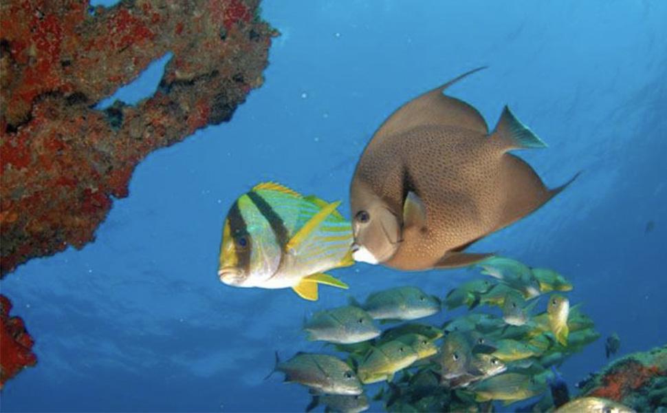 Scuba Diving and Snorkel: Scuba Diving at Night