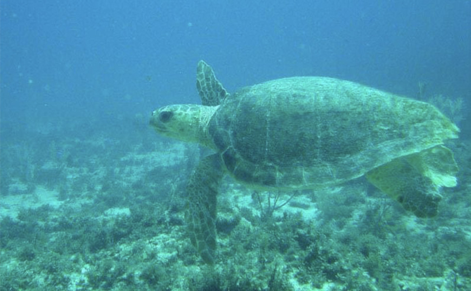 Scuba Diving and Snorkel: Snorkel Expedition