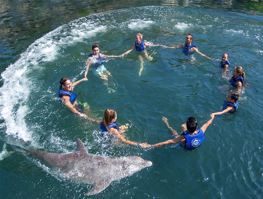 Dolphin Inclusive Primax and Xelha
